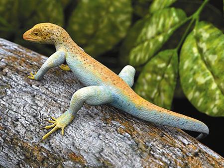 Salamander Model